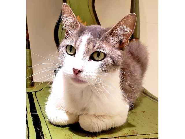 Pets for adoption - June 15, 2018