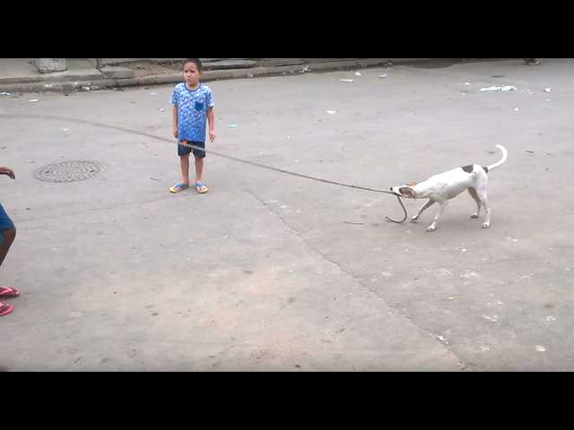 Have You Seen This? That dog can jump rope