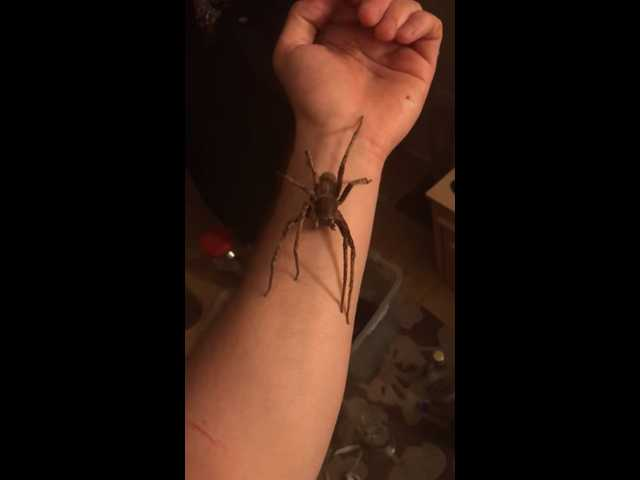Have You Seen This? Man holds world's most venomous spider