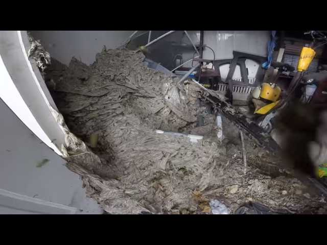 Have You Seen This? Bug guy dismantles enormous wasp nest