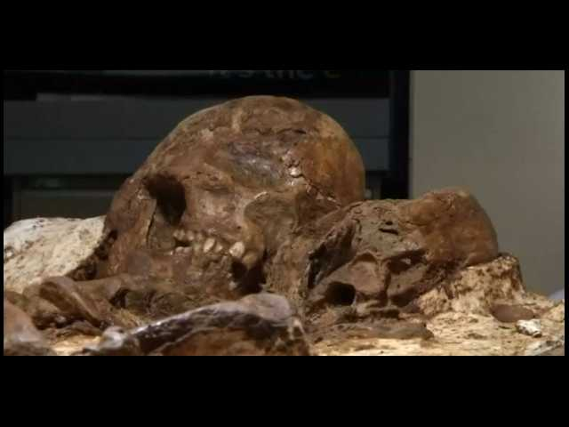 One of the best parenting tips comes from a 4,800-year-old fossil