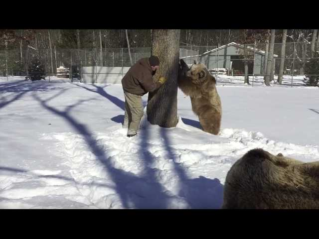 The Clean Cut: Watch this man play peekaboo with two bears