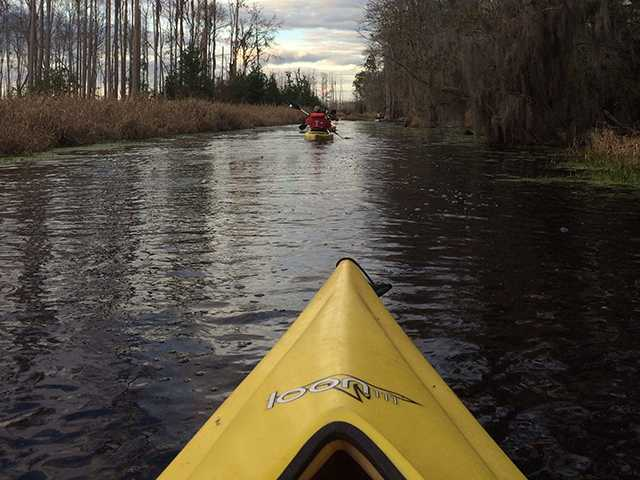 Paddle Under the Stars in the Okefenokee