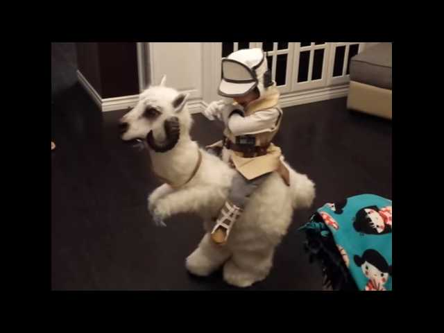 Have You Seen This? Little boy's homemade tauntaun costume wins Halloween