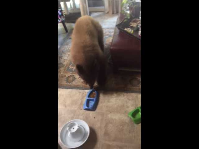 Have You Seen This? Bears break into man's house