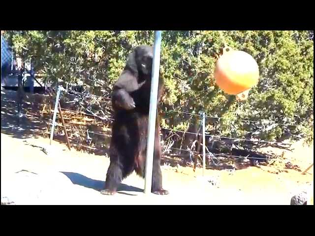 Have You Seen This? The tetherball bear