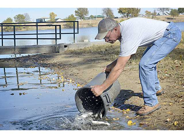 City of Great Bend Public Lands Director Scott Keeler releases a bucket full of largemouth bass into Veterans Memorial Lake Thursday morning. The fish were purchased with the help of the Great Bend Rotary Club.