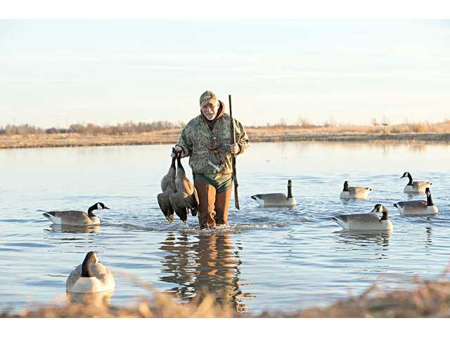 A goose hunter wades through Cheyenne Bottoms. An amendment to the state's constitution on the Nov. 8 ballot would make hunting, fishing and trapping protected as a constitutional right.