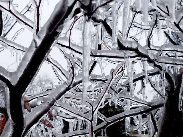 A coating of ice on this red bud tree on Broadway creates an intricate display.