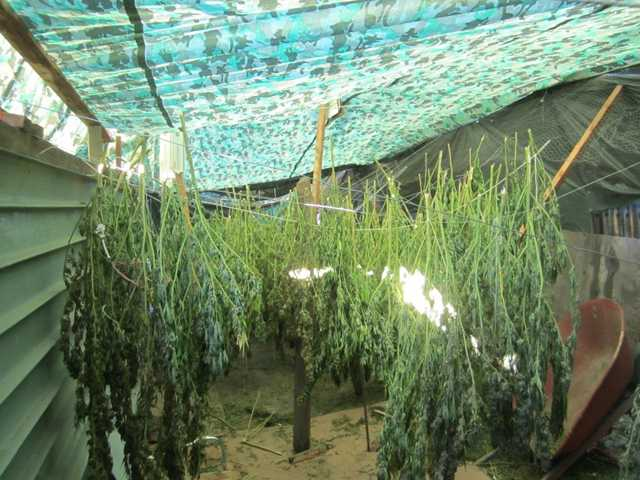 Manteca Police seize 1.3 tons of marijuana