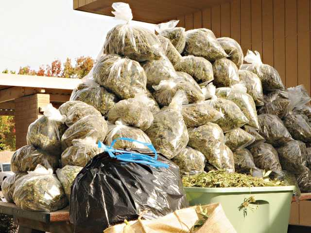 MPD makes $300K pot bust
