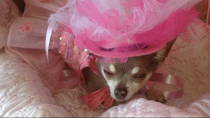 Pink Pooch Parade in Olde Town, Oct. 5