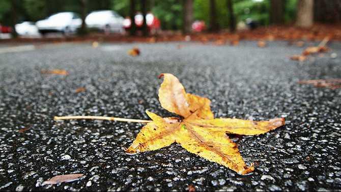 A fall rain