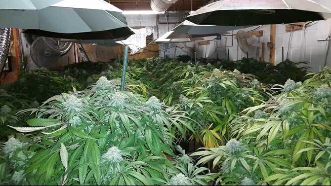 Deputies bust marijuana grow house New Year's eve