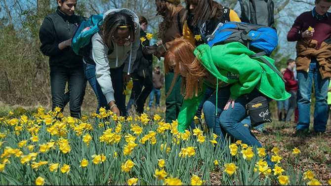 GPC in bloom for Daffodil Festival, March 31-April 1