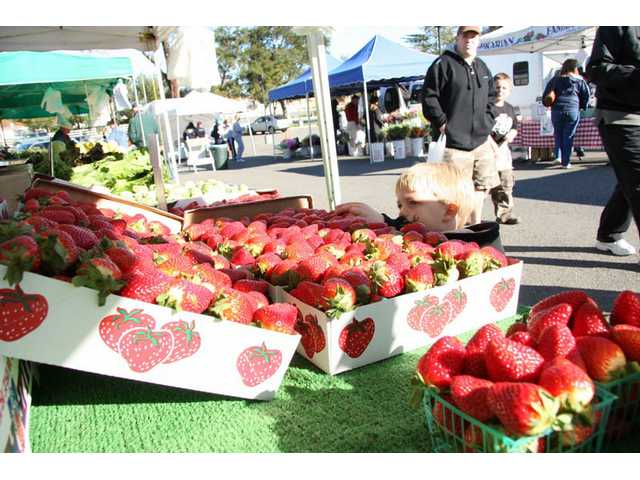 Two-year-old Nickolas Valenzuela, of Saugus, picks out a strawberry at the Santa Clarita Farmers' Market at College of the Canyons Sunday morning.