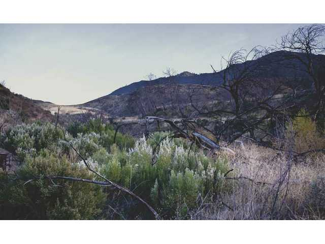 The City Council is eyeing the purchase of 140 acres of open space in Placerita Canyon, part of its ongoing effort to complete a so-called green belt around the city. Approximately 10 acres of the land are contaminated.