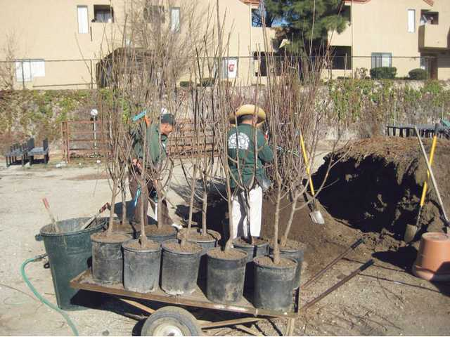 Bare root fruit trees are priced $29.99 to $59.99, depending on the number of grafts.
