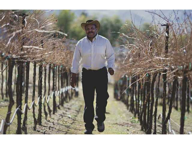 Washington walks his vineyard in Acton, which will turn 7 years old in March.