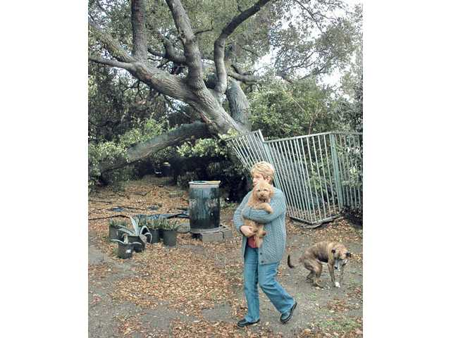 Newhall resident Gina Barnett and her dogs Homer, in her arms, and Tigger, survey their backyard Sunday where a Quigley Canyon Road neighbor's oak tree fell into due to heavy rains in past weeks.