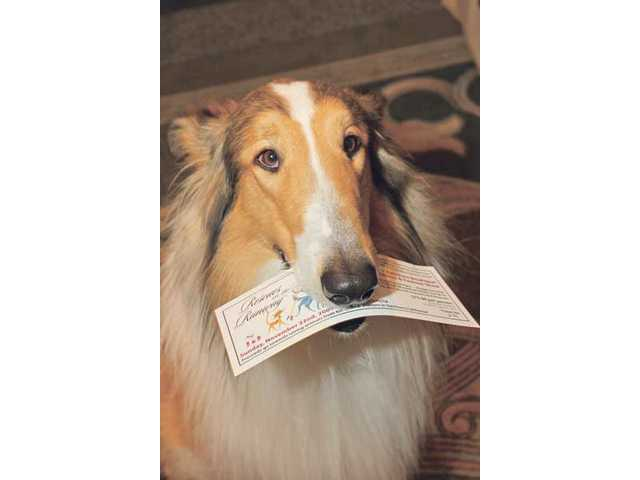 """Lassie presents her ticket to the inagueral """"Rescues on the Runway"""" event held at the Hyatt Regency Valencia."""