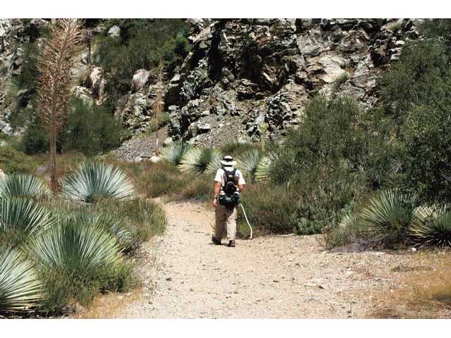 Jim Nowatski enters the Sheep Wilderness in the San Gabriel Mountains.
