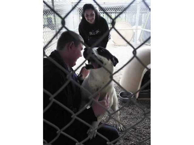 John Hogan, 18, of Saugus and Ginger Oliver, 17, get acquainted with Dylan, one of some 200 animals rescued.