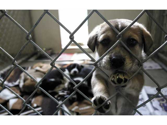 A litter of puppies is among the pets still unclaimed. Sixteen animals were placed in homes during the Saturday event held in Saugus.