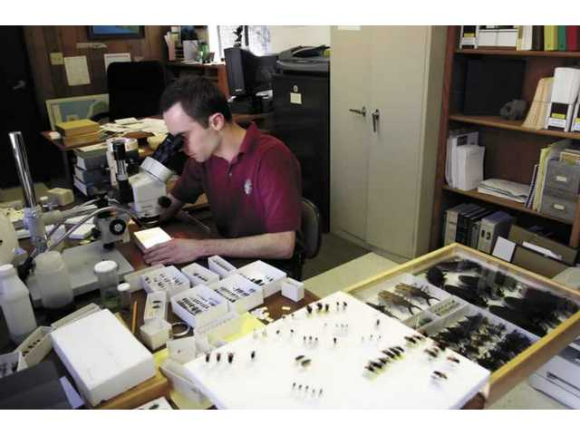 Ian Swift, working in his Placerita Nature Center office, studies different species of beetles he has collected over the years.
