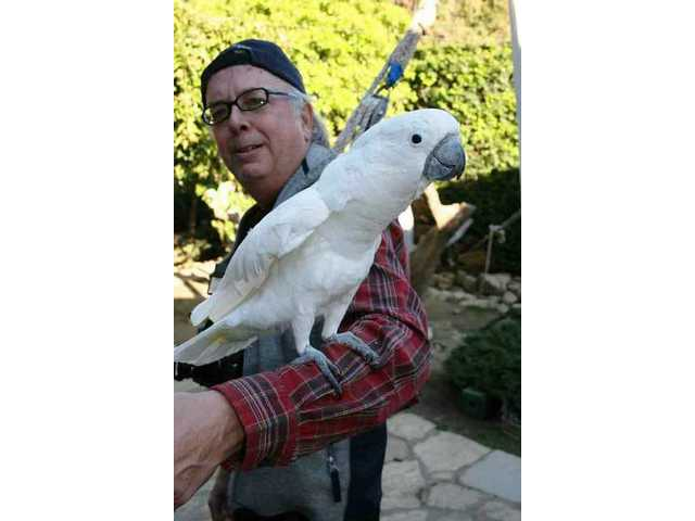 A friendly cockatoo, one of more than 200 exotic birds who live large in the Playboy Mansion's well-kept aviary, perches on a photographer's forearm as if posing for the camera.