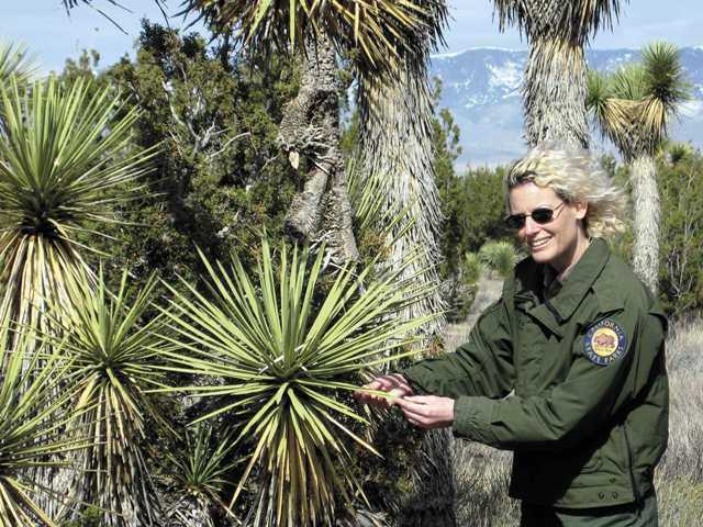 Jean Scott, interpretive specialist with the California State Parks system, examines a Joshua tree at the Arthur B. Ripley Desert Woodland. It's not actually a tree but a giant lily.