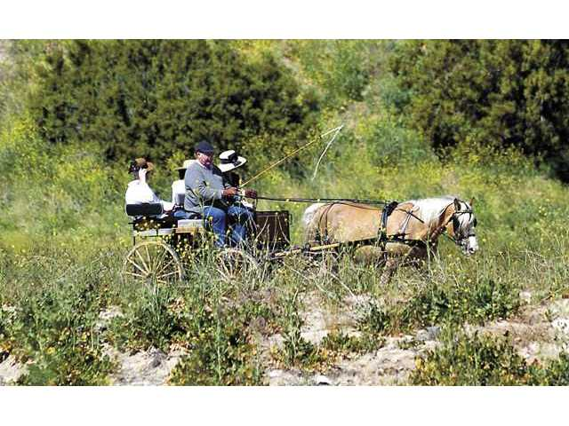 Van and Patty Pierce drive their carriage along a dirt path near Placerita Canyon.