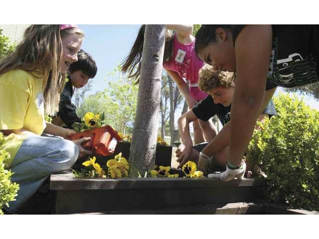 Canyon High ASB students and Leona Cox Student Council members plant flowers around the elementary school campus on Friday as part of Student Leadership Day.