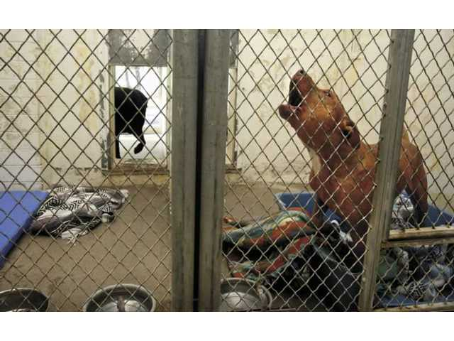 The Castaic Animal Shelter is undergoing renovations, including new kennels.