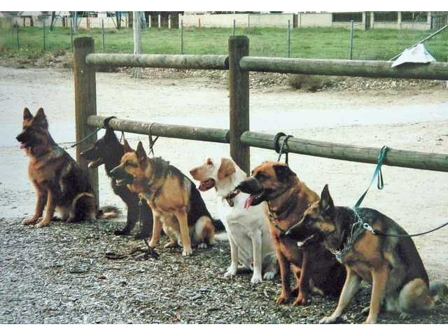 The dogs of the group pose for a group photo, left to right, Ruby, Onyx, Ted, Levi, Jessie and Belle.