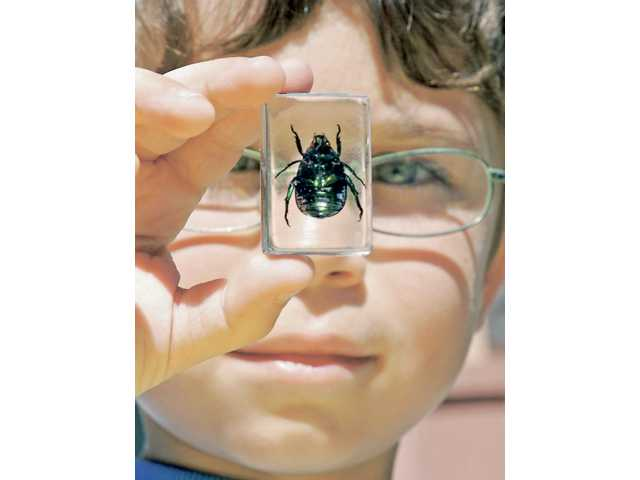 /First-grader Michael Gilbert gets a closeup look at a beatle on display for Pico Canyon Elementry School students as part of Going Green Week on Friday.