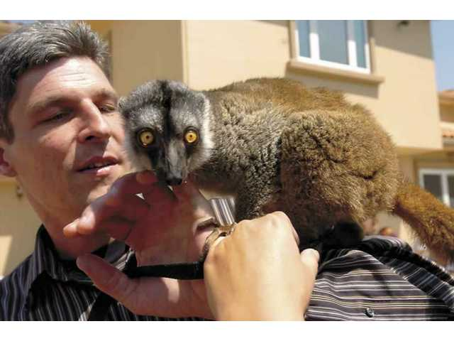 Animal trainer Jeff Lee plays with a lemur in front of several children. Lee, who has appeared on the Tonight Show with Jay Leno, has been performing with exotic animals in the Santa Clarita Valley for over three years.