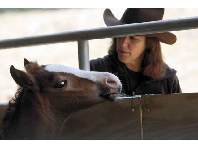 Animal advocate Joan Waldman pets two-week-old Faith in Sand Canyon.