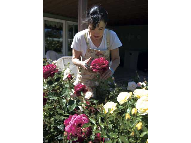 Stephanie Correnti inspects one of her roses.