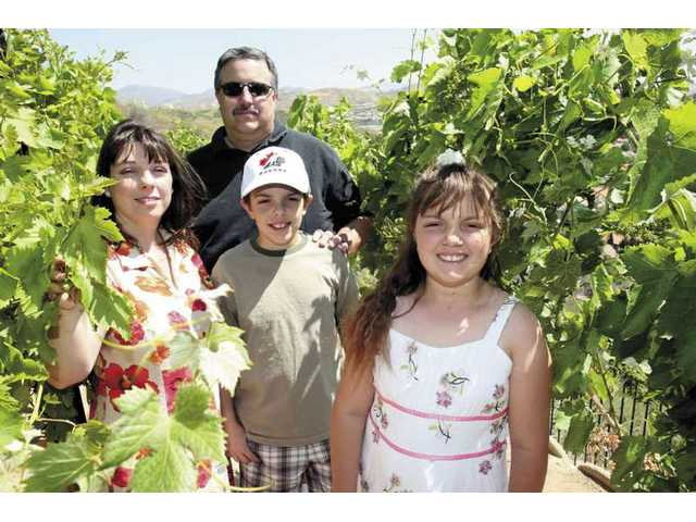 The Kraut family poses among some of the 107 grapevines growing on their Saugus property. When they bought their house they had no idea how to make wine and considered tearing the vines out. But since that time they have become full-blown vintners.