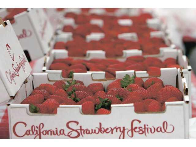 Strawberry Festival.