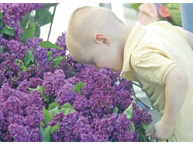 Jake Kenney, 2,  of Castaic gets a nose full of lilacs at the Farmers' Market. The Castaic Sports Complex hosts the Farmer's Market every Saturday from 9 a.m. to 1 p.m.