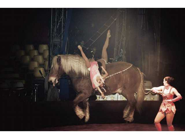 "Miss Genevieve directs the Belgian draft horse Rodin as he carries an ""Equestrian Fairy Princess"" during a Circus Vargas performance. The act is combined with performances by clowns, aerial artists an more."