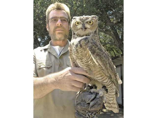 Placerita Nature Center animal keeper Dave Stives displays Orion, a male horned owl. Visitors to the Nature Center can take a guided hike from 9 a.m. to 11 a.m. on the second Saturday of each month to learn more about local birds of prey.