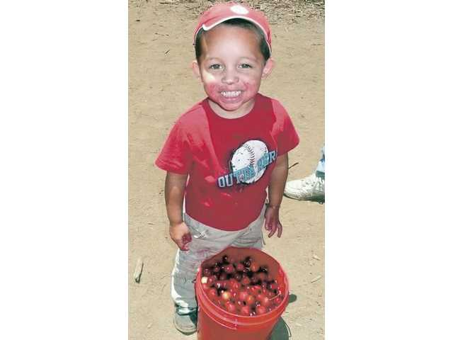 Picking your own cherries is a fun family activity and you can get the freshest, sweetest fruit at a great price.
