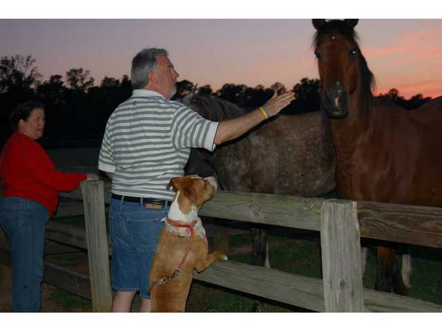 Loren meets the equine neighbors of Mark and Julie Trexler, family friends, while visiting their home in Dublin, Ga.