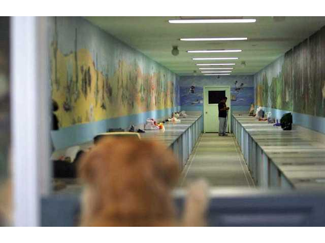 Ginger, a Golden Retriever, watches as manager Alex Morin works in the kennel room at Calgrove Kennel.