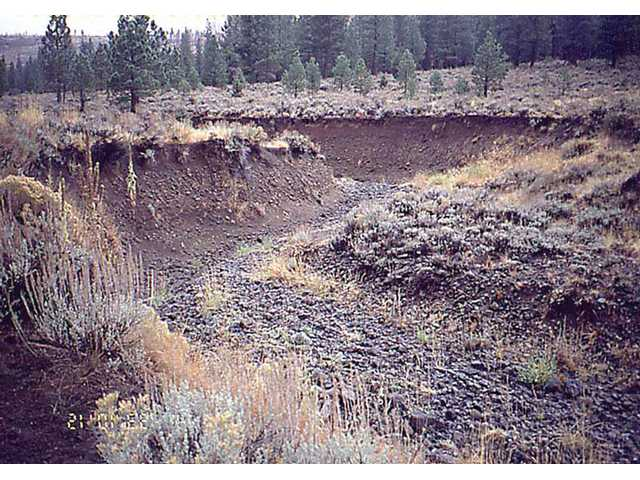 Cottonwood Creek, Big Flat in 1993 - Deep trench-like channels are cutting into meadows that have historically retained water. Special county teams who recognized the phenomenon have been working to fill in the channels and restore the meadows.