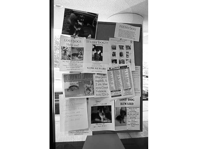 Dozens of flyers about lost pets crowd the bulletin board at Canyon Country Animal Hospital on Soledad Canyon Road in Canyon Country.