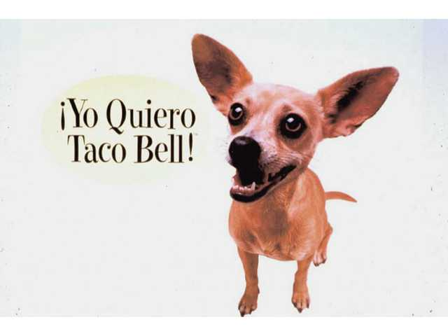 This undated picture provided by Taco Bell shows part of a Taco Bell advertisement featuring Gidget the Chihuahua, who died Tuesday. The owner of Studio Animal Services said Gidget suffered a massive stroke at her trainer's home in Castaic and had to be euthanized.